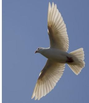 The Holy Spirit as represented as a dove